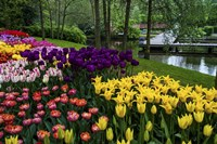 Colorful Corner Keukenhof Tulips Garden 1 Fine Art Print