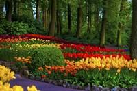 Colorful Corner Keukenhof Tulips Garden 3 Fine Art Print
