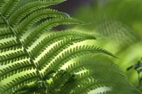 Healing Art Fern Leaf Fine Art Print
