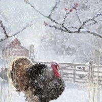 Christmas Turkey Fine Art Print