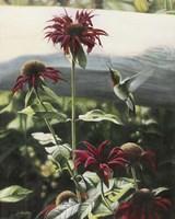 Lynn's Garden Fine Art Print