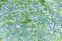 Field of Blue Flowers Fine Art Print