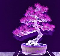 Purple Flame Bonsai Fine Art Print