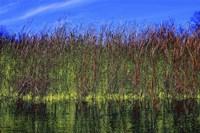 High Grass Blue Sky Fine Art Print