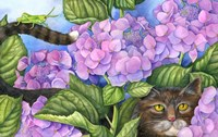 Cat in the Hydrangeas Fine Art Print