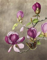 Magnolia and Butterfly Fine Art Print