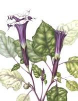 Mr Purple Fine Art Print
