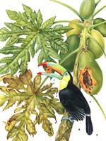 Toucan in Papaya Tree Fine Art Print