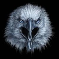 Eagle Face Fine Art Print