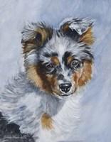 Australian Puppy Fine Art Print
