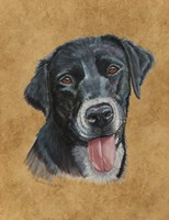 Bandit Black Lab Fine Art Print