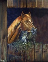 Barn Buddies Kitten And Horse Fine Art Print