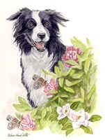Border Collie With Flowers Butterflies Fine Art Print
