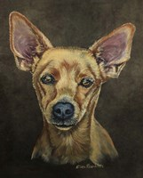 Cody The Chihuahua Fine Art Print
