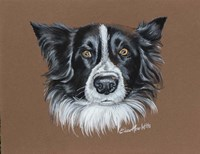 Gunner Border Collie Fine Art Print