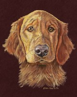 Linus Retriever Dog Fine Art Print