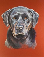 Maggie Black Lab Dog Fine Art Print