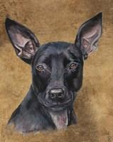 Missy Pitbullmix Dog Fine Art Print