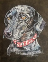 Pixie Dachshund Dog Fine Art Print