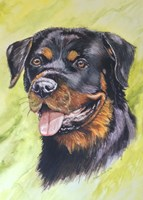 Rotty Dog 1 Fine Art Print