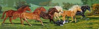 Running Horses With Border Collie Fine Art Print
