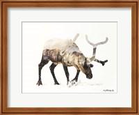 Arctic Reindeer Fine Art Print