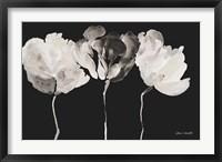 Trio in Light on Black Fine Art Print