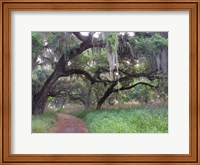 Trail Beneath Moss Covered Oak Trees, Florida Florida Fine Art Print