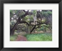 Trail Beneath Moss Covered Oak Trees, Florida Florida Fine Art Print