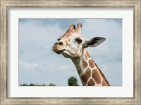 Close-Up Of Giraffe Against A Cloudy Sky Fine Art Print