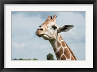 Close-Up Of Giraffe Against A Cloudy Sky Fine Art Print