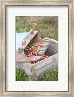 Cranberries And Scoop, Massachusetts Fine Art Print