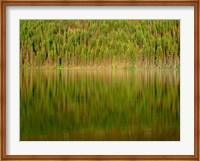 Conifer Forest Reflects In Kintla Lake, Montana Fine Art Print