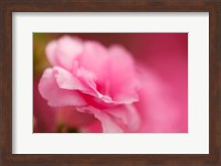 Bright Pink Azalea Fine Art Print