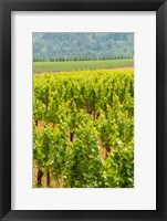 Winery And Vineyard In Dundee Hills, Oregon Fine Art Print