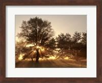 Sunrise Through Fog And Trees At Cades Cove Fine Art Print