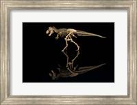 T-Rex Skeleton Replica Reflection Fine Art Print