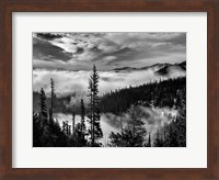 Olympic National Park, Washington (BW) Fine Art Print