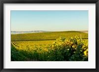 Vineyard At Royal Slope, Washington State Fine Art Print