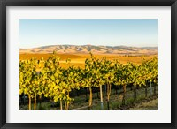 The Blue Mountains Overlook A Vineyard, Washington State Fine Art Print