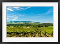 Vineyard Landscape In Walla Walla Fine Art Print