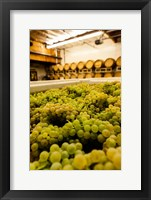 Bin Of Chardonnay Grapes Awaits Beind Crushed Fine Art Print
