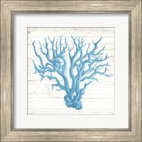 Coral On Wood Mate Fine Art Print