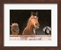 Smiles from the Barn Fine Art Print