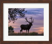 Sunrise Bull Fine Art Print