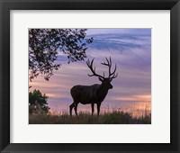 Sunrise Bull Fine Art Print