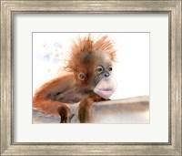Baby Monkey Fine Art Print