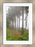 Forest of The Flowers Fine Art Print