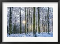 Frosty Forest Fine Art Print