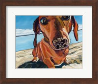 Sand Dog Fine Art Print